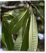Natural Leaf Canvas Print