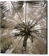 Natural Umbrella Canvas Print
