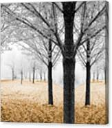 Nature - Mixed Season Canvas Print