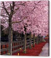 Nature - Pink Trees Canvas Print