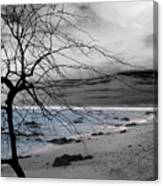 Nature - Sad Tree Canvas Print