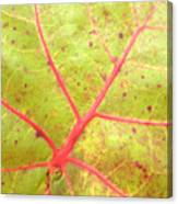 Nature Abstract Sea Grape Leaf Canvas Print