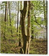 Nature, Bare Tree. Canvas Print