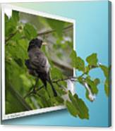 Nature Bird Canvas Print