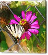 Butterfly In Love Canvas Print
