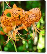 Nature Floral Orange Tiger Lily Flowers Baslee Troutman Canvas Print