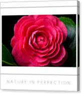 Nature In Perfection Poster Canvas Print