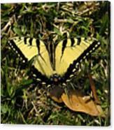 Nature In The Wild - Splendor In The Grass Canvas Print