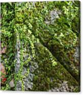 Nature - Living Retention Wall 1 Canvas Print