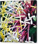 Nature Museum Botanical Canvas Print