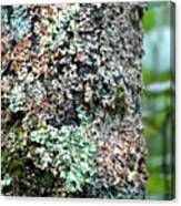 Nature Painted Tree Bark Canvas Print