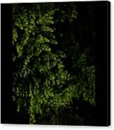 Nature Plants Canvas Print