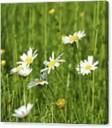 Nature Spring Scene White Wild Flowers Canvas Print