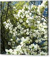 Nature Tree Landscape Art Prints White Dogwood Flowers Canvas Print