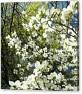Nature Tree Landscape Art Prints White Dogwood Flowers Canvas Print