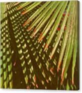 Nature Up Close 6 Canvas Print