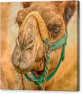 Nature Wear Camel Canvas Print