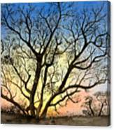 Natures Backlight Canvas Print