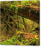 Nature's Bridge Canvas Print