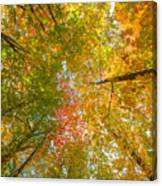 Natures Canopy Of Color  Canvas Print