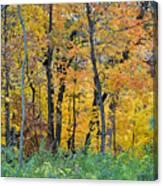 Nature's Colors Canvas Print