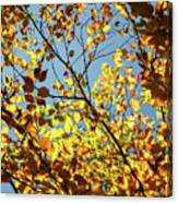 Natures Gold Canvas Print