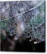 Nature's Lace Canvas Print