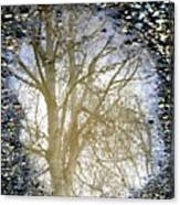 Natures Looking Glass 4 Canvas Print