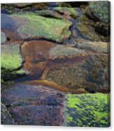 Nature's Mosaic No. 1 Canvas Print