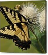 Natures Pin Cushion Canvas Print