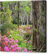 Natures Scenery  Canvas Print