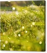 Nature's Sparkles Canvas Print