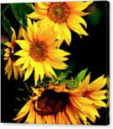 Natures Sunflower Bouquet Canvas Print