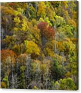 Nc Fall Foliage 0561 Canvas Print