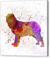 Napolitan Mastiff In Watercolor Canvas Print