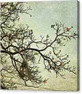 Nearly Bare Branches Canvas Print