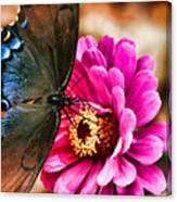 Nectar Feast Canvas Print