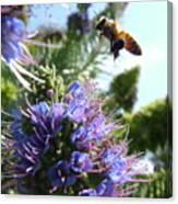 Nectar Landing Canvas Print