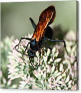 Nectar Lover Canvas Print