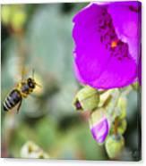 Nectar Run Canvas Print