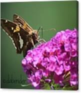 Nectaring Moth Canvas Print