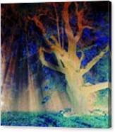 Negative Tree And Sunbeams Canvas Print