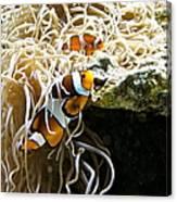 Nemo And Marlin Canvas Print