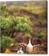 Maui Hawaii Haleakala National Park Nene Hawaiian State Bird Canvas Print