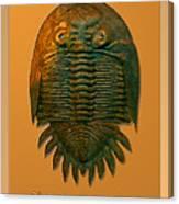 Neometacanthus Fossil Trilobite Canvas Print