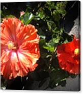 Neon-red Hibiscus Flowers 6-17 Canvas Print