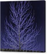 Neon Tree Canvas Print