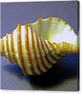 Neptune Whelk Seashell Canvas Print