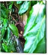 Nest In Plain Sight Canvas Print
