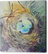 Nest In The Ferns Canvas Print